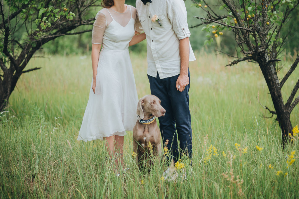 How to Involve Cats and Dogs in Weddings